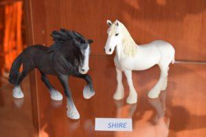 Konie L.paciuch